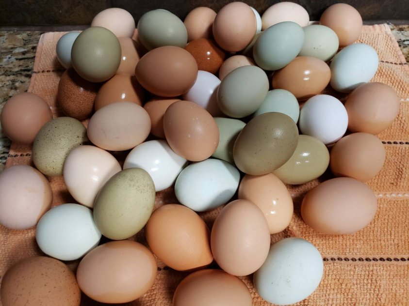 Chicken Table Eggs & Fertilized Hatching Eggs whatsapp +27734531381