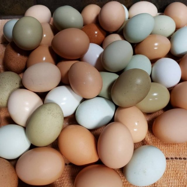 Chicken Table Eggs & Fertilized Hatching Eggs whatsapp +27734531381